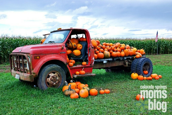 tammy pumpkin autumn dates
