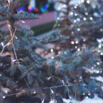 Holiday Power Struggles: A Loving Tug of War
