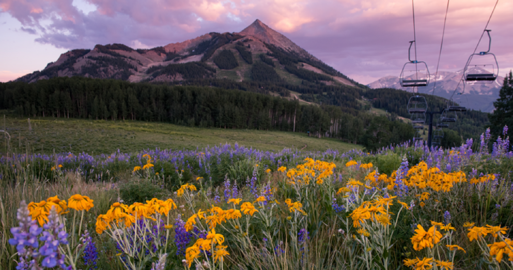 Crested Butte in summer, awash in wildflowers.