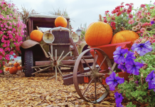 Fall Festival Featured