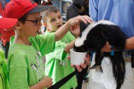 campers touching skunk crop