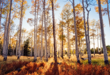 Fall Color Day Trips Featured